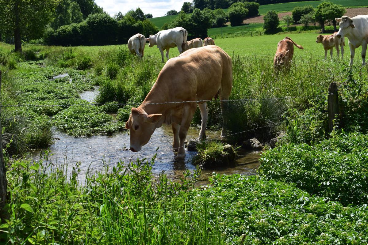 Nous sélectionnons des animaux élevés en plein air pour vous assurer une qualité irréprochable.